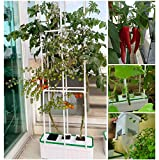 Smart Hydroponics Growing System for Indoor Gargen,E-SUPEREGROW Hydroponic Gardening System with Smart Timer Pump,Large Self Watering Planter with 60' Trellis for Cucumber Tomato Herd Pepper Mint