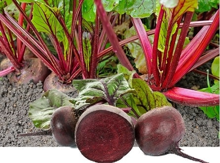A picture of beets growing and a beet cut in half