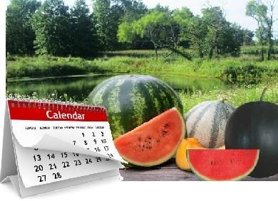 Short Season Melons Luv2garden Com