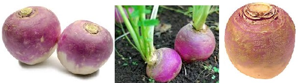 Three different images of turnips.