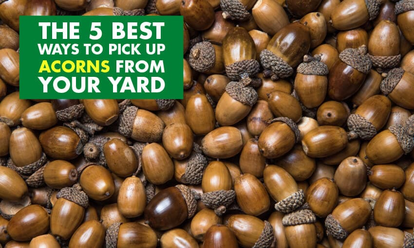 A pile of acorns with text that reads the 5 best ways to pick up acorns from your yard.