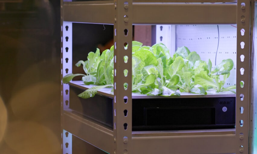 A hydroponic garden on metal shelves.