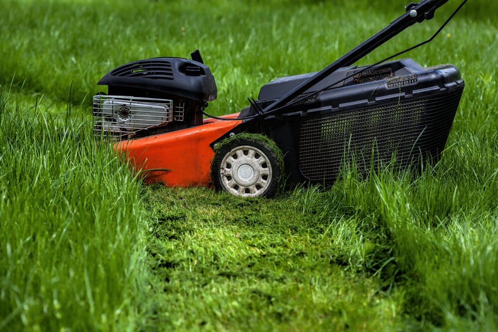 A picture of a lawn mower cutting long grass with grass clippings in the strip that's been mowed.