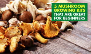 A picture of mushrooms on wood planks. Text reads 5 mushroom growing kits great for beginners.