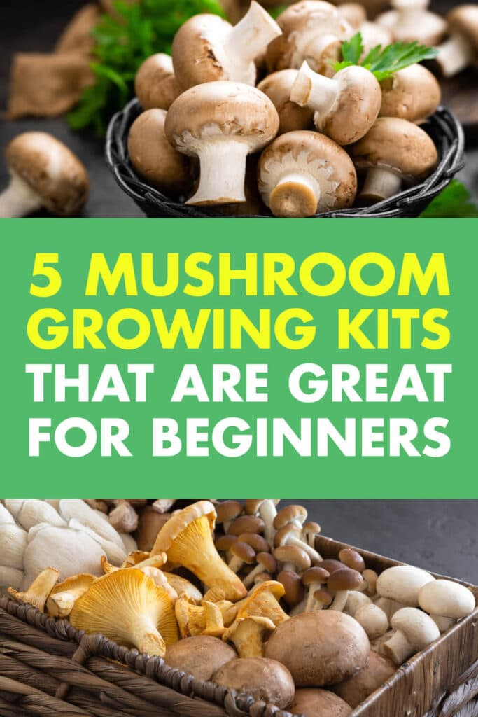 Two pictures of mushrooms in containers. In-between the pictures is text reads 5 mushroom growing kits great for beginners.