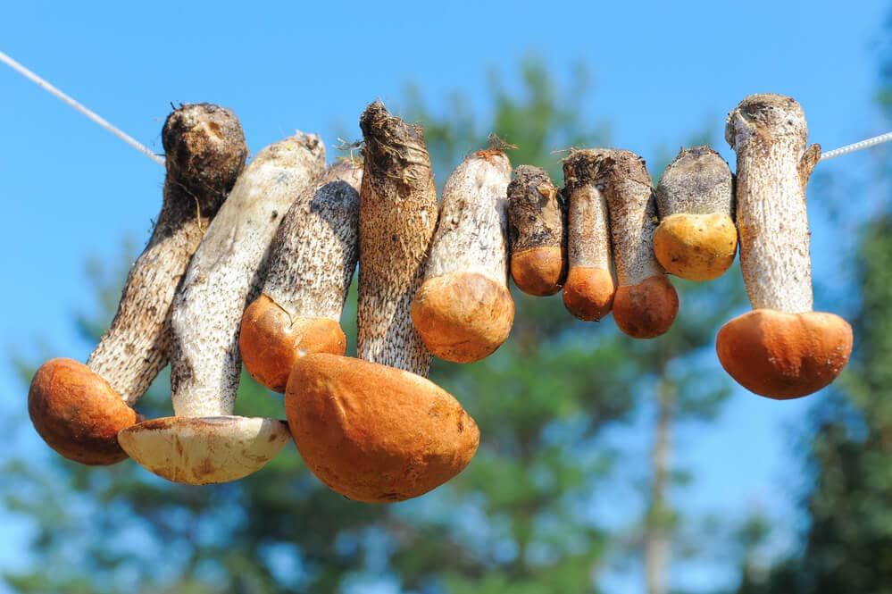 Mushrooms drying in the sun, hanging from a line.