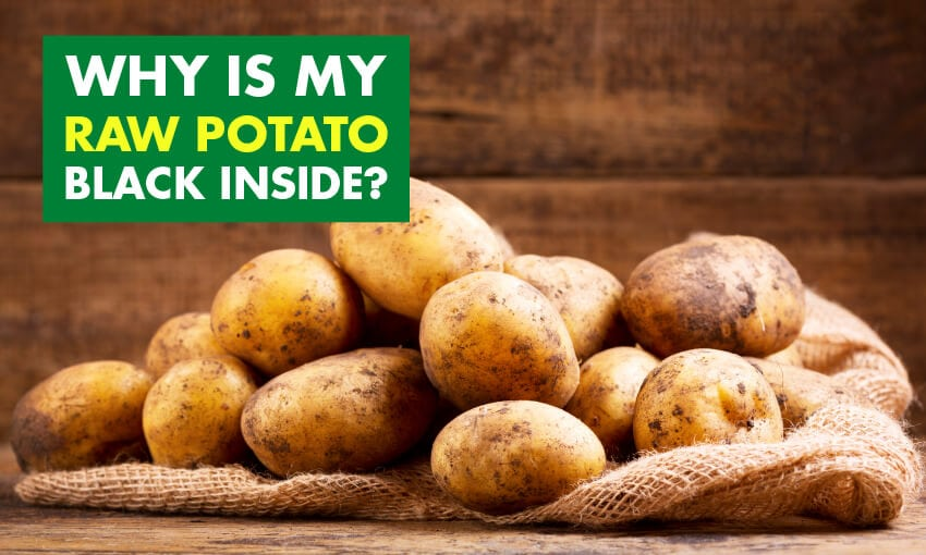 A picture of potatoes with text that reads why is my raw potato black inside