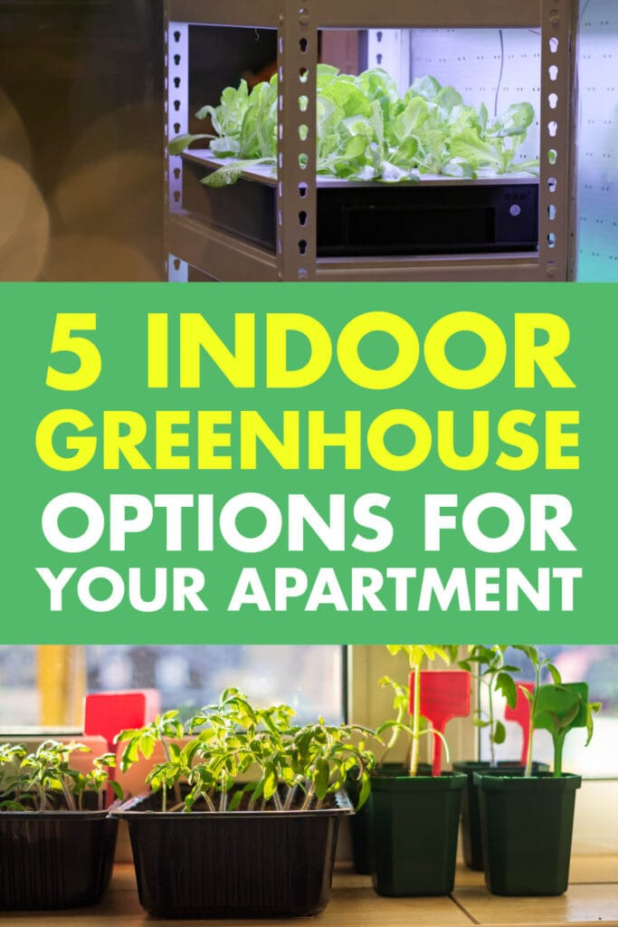 Two pictures of plants being grown indoors. In-between the pictures text reads 5 indoor greenhouse options for your apartment.