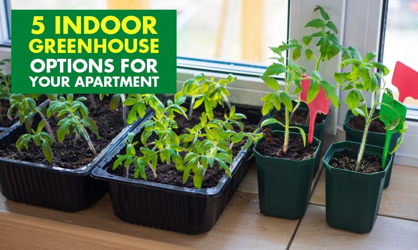 An image of plants growing indoors. Text reads 5 indoor greenhouse options for your apartment.