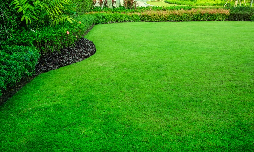 A picture of a well maintained green yard.