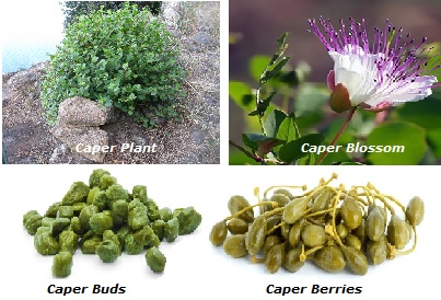 A collage of four different stages of a caper plant. One is title caper plant, another is titled caper blossom showing the caper blossoming, another is caper buds with a pile of caper buds, and another title caper berries with a pile of caper berries.